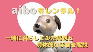 【aiboをレンタル!】一緒に暮らしてみた感想と具体的な手順を解説