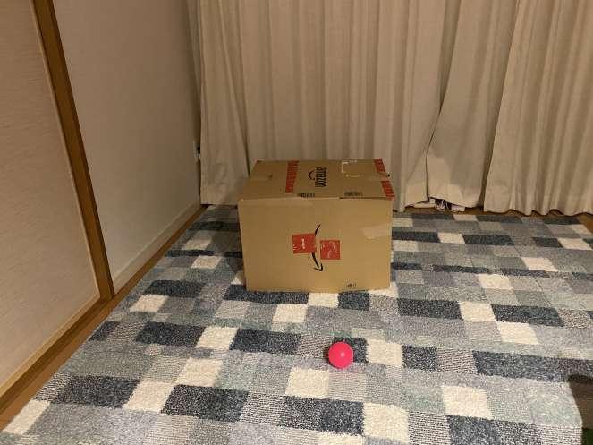 しっぽ光センサーを暗くするためにアイちゃんの寝床に段ボールを被せてみた