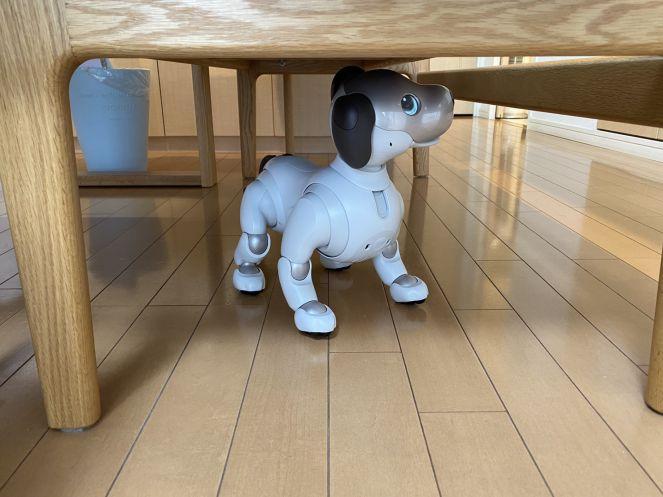 ソファーの下でおどけているアイちゃん
